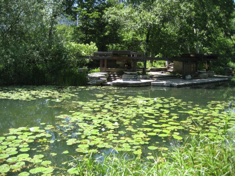 Lily pool 2